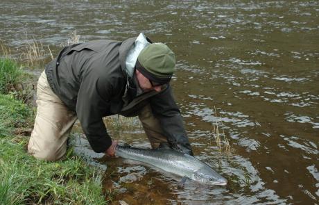 Saving Eden's Wild Atlantic Salmon.