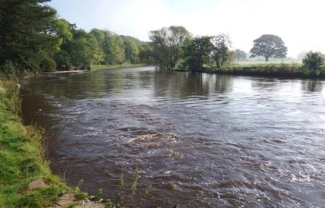 River Eden October 7th 2014