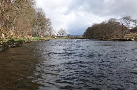 River Eden 24th March 2015