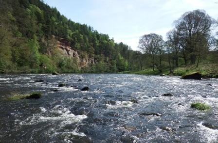 River Eden 15th May 2015.