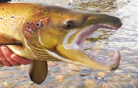 River Tay Autumn salmon course, 2016.